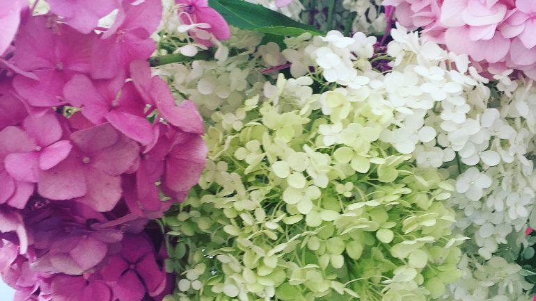 Bouquet di ortensie in casa e in giardino