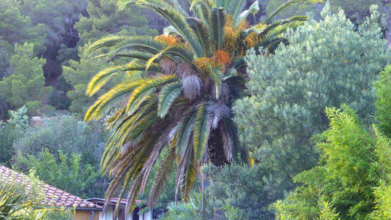 Giardino botanico di Villa Ottone