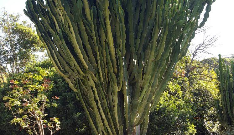 Restaurato l'Orto botanico di Cagliari