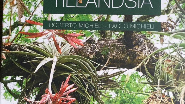 Tillandsie, un mondo da scoprire