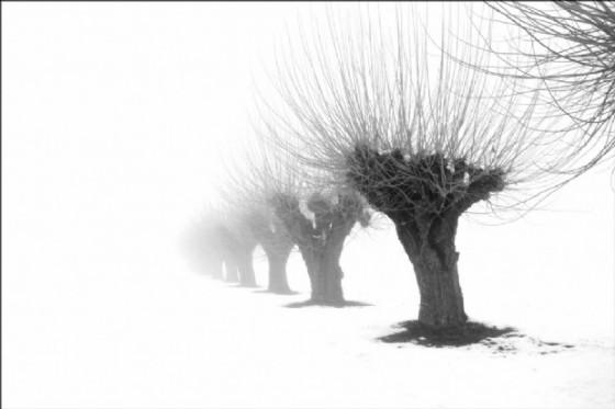 La poesia dell'inverno di Renato Luparia