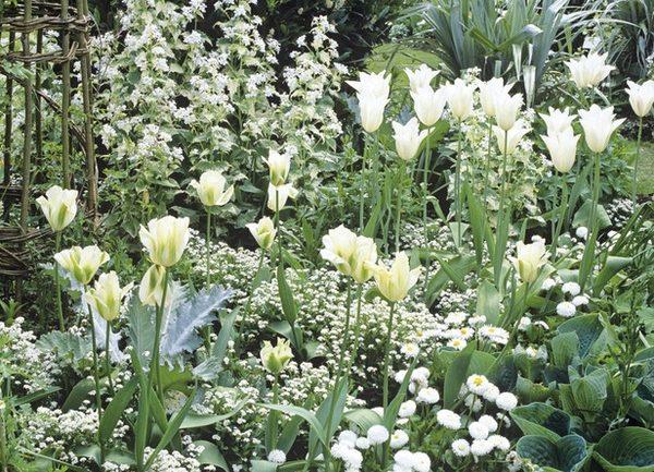 Un giardino bianco per White in the City