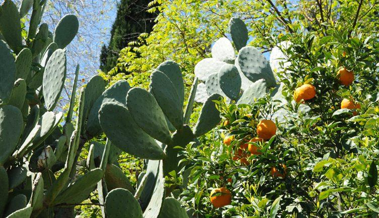 Andar per giardini: la Sicilia nord-orientale, da Messina a Siracusa
