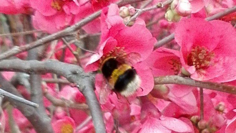 La piccola ape di Emily