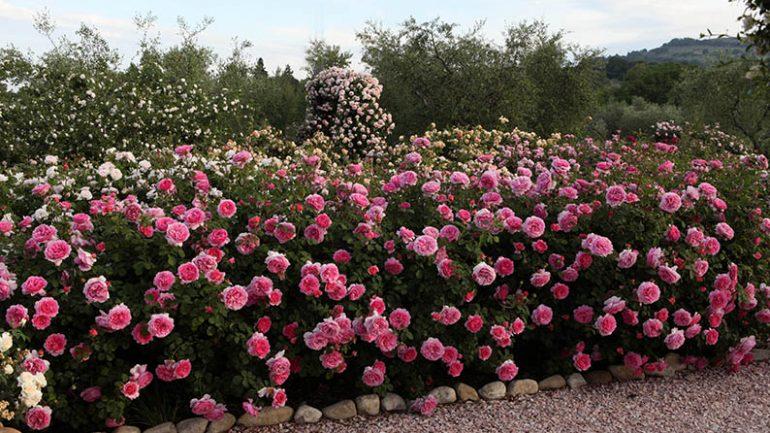Andar per vivai (ma anche giardini e cantine): alla scoperta dell'Umbria