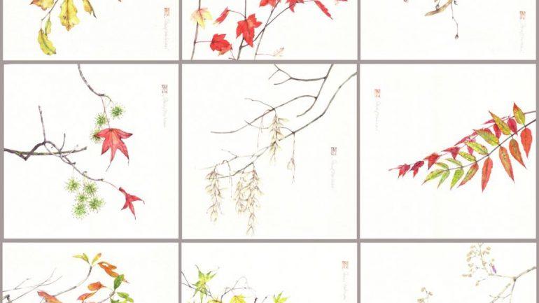 Le foglie d'autunno ritratte da Silvia