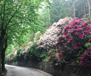Vivaio Margine Rosso : Andar per vivai: biella e dintorni piemonte 3 italian botanical