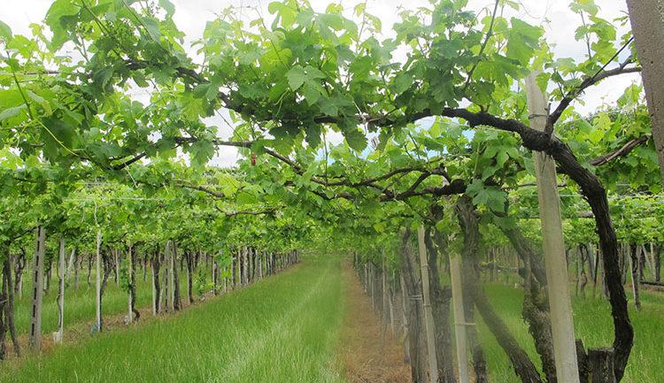 Andar per vivai e cantine: a nord di Torino (Piemonte/4)