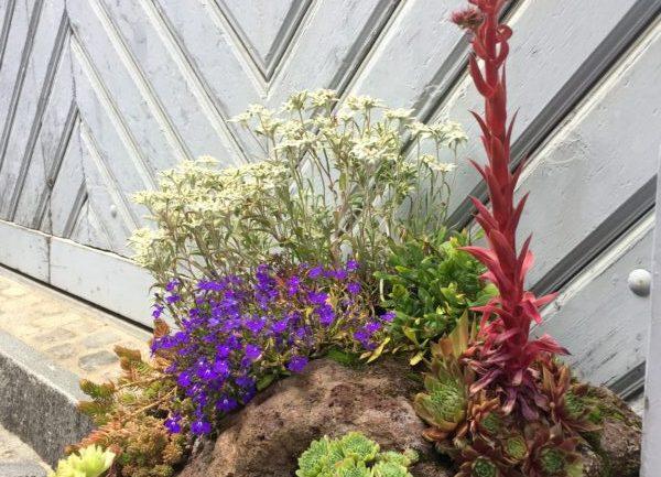 Mini giardino roccioso