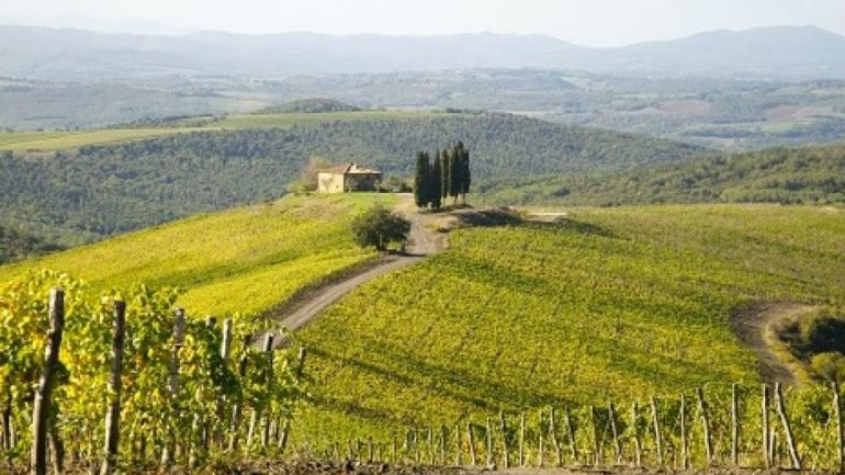 Wandering through cellars: the Montalcino territory