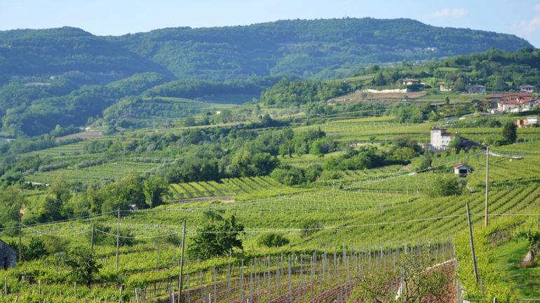 Andar per cantine: il territorio della Valpolicella