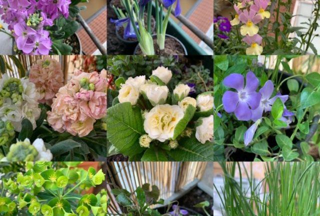 Nuovi fiori per marzo