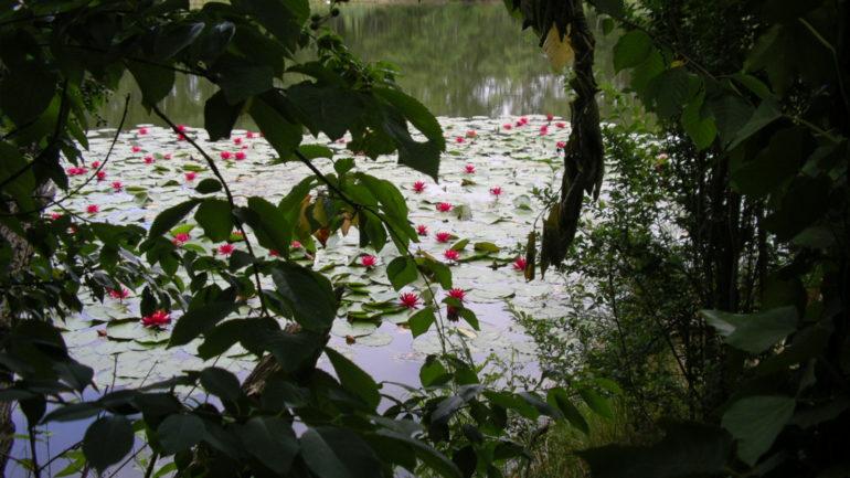 Il Lago Azzurro e le ninfee rosa