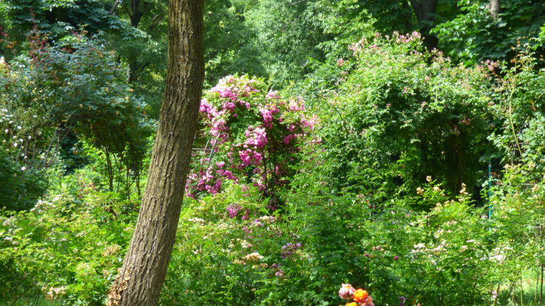 Andar per roseti e giardini di rose