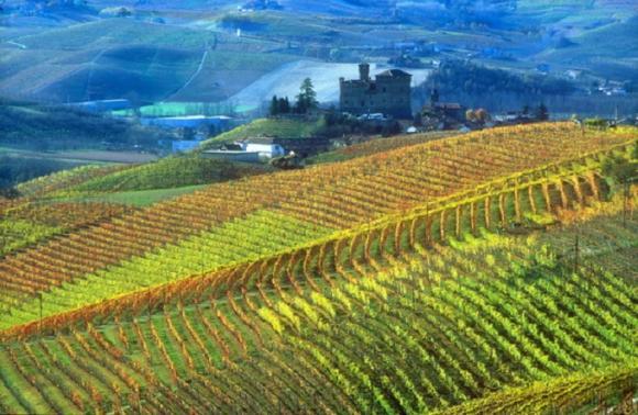 Andar per vivai (e cantine) in Piemonte