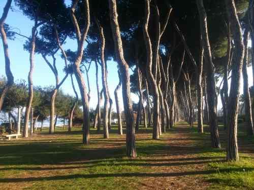 La pineta di Gabriele D'Annunzio