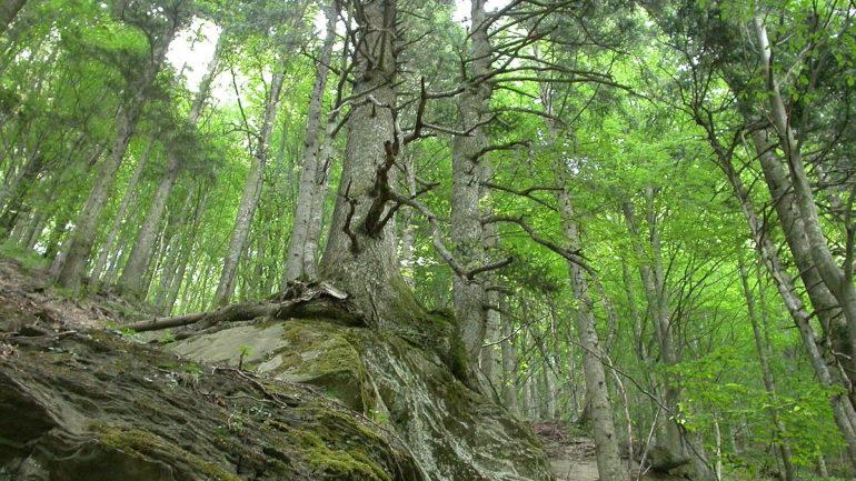 Andar per boschi e foreste 3: Italia meridionale e Isole