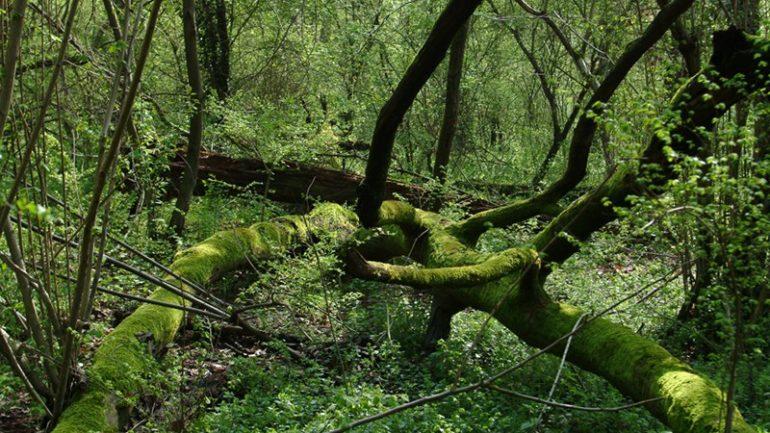 Andar per boschi e foreste 1: Italia settentrionale e centrale