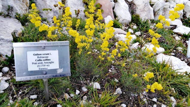 Andar per orti e giardini botanici di montagna 2: Italia centro-meridionale