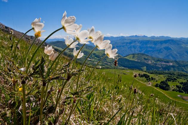 Andar per orti e giardini botanici di montagna 1: Italia settentrionale