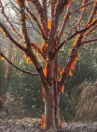 Il bello dell'inverno: le cortecce